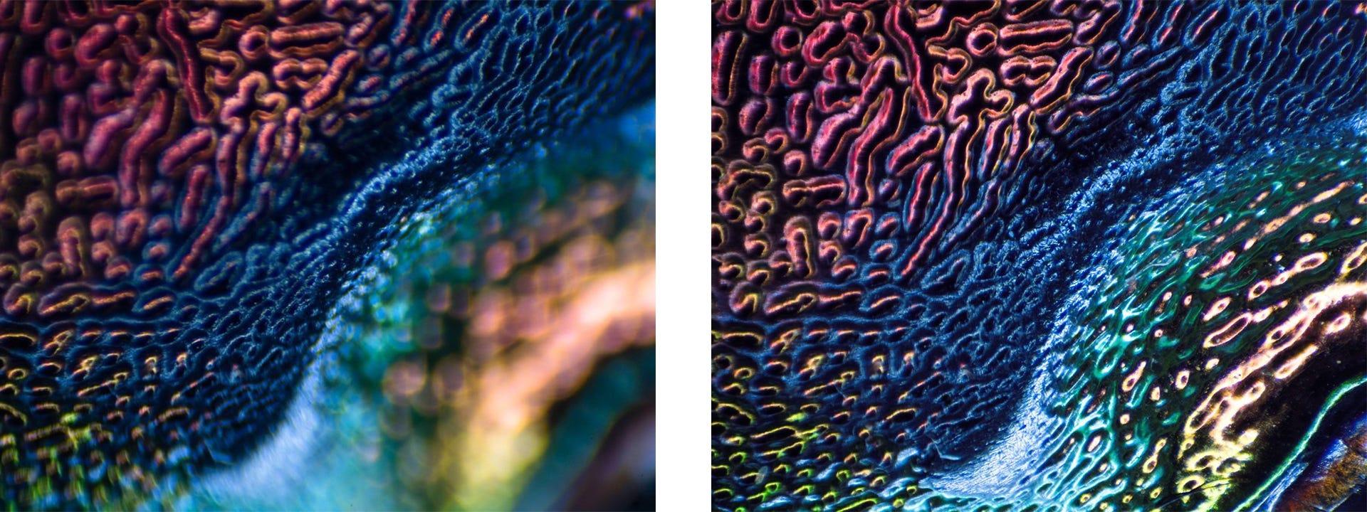 photo micrography close up image